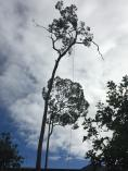 FREE QUOTES Nerang Tree Cutting , Felling & Removal _small