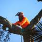 All our treelopping work is done to Australian Standards