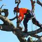 No job is too large or small for our qualified arborists.