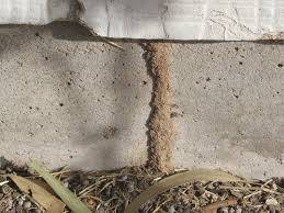 A Termite lead into a house