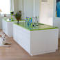Kitchen benchtops in Citron Vert