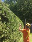 Tree Service Coquitlaam Inc.